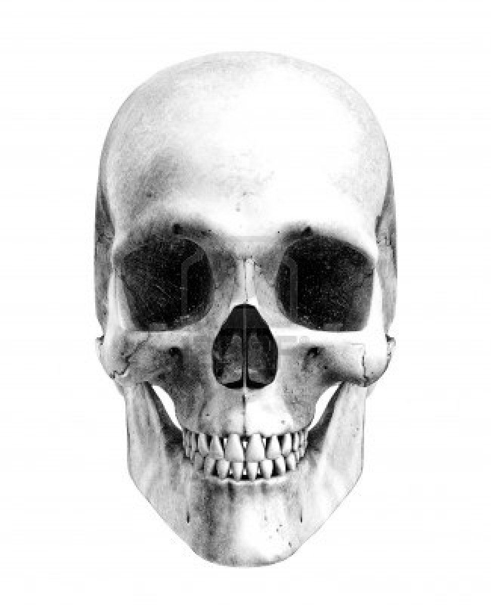 human skull front view pencil drawing style this is a 3d render