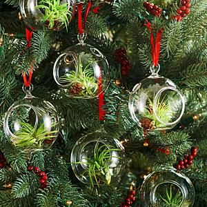 Living Ornaments Christmas Plants Gifts Christmas Plants Christmas Tree Decorations