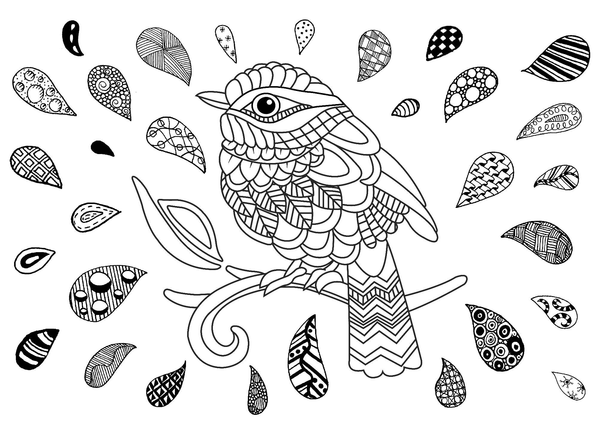 Pin On Bird Butterfly Coloring Pages
