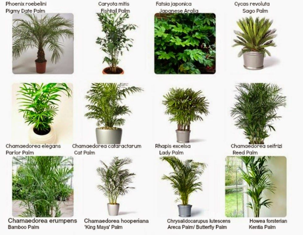 Marvelous Interiorscaping Compendium: INDOOR PLANT IDENTIFICATION