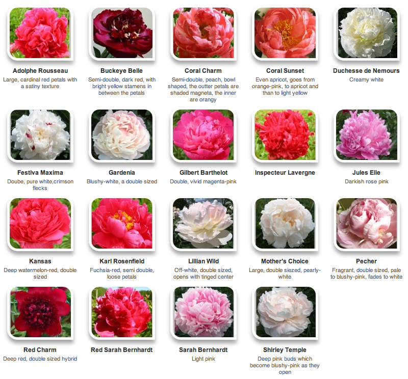 Peonies by color via Hyperactive Farms Peonies garden