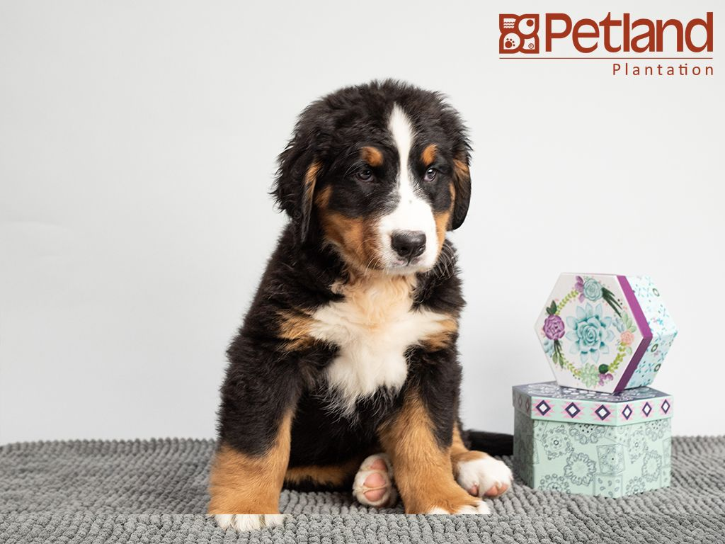 Puppies For Sale Puppies Puppy Friends Puppies For Sale