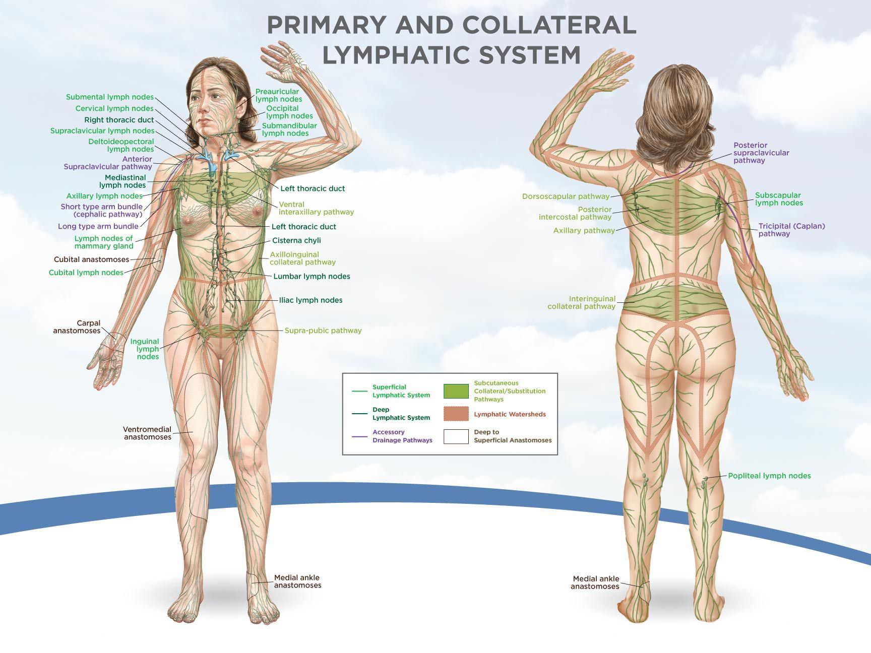 Dry Brushing For Healthy Skin  Natural  Lymphatic System -6636