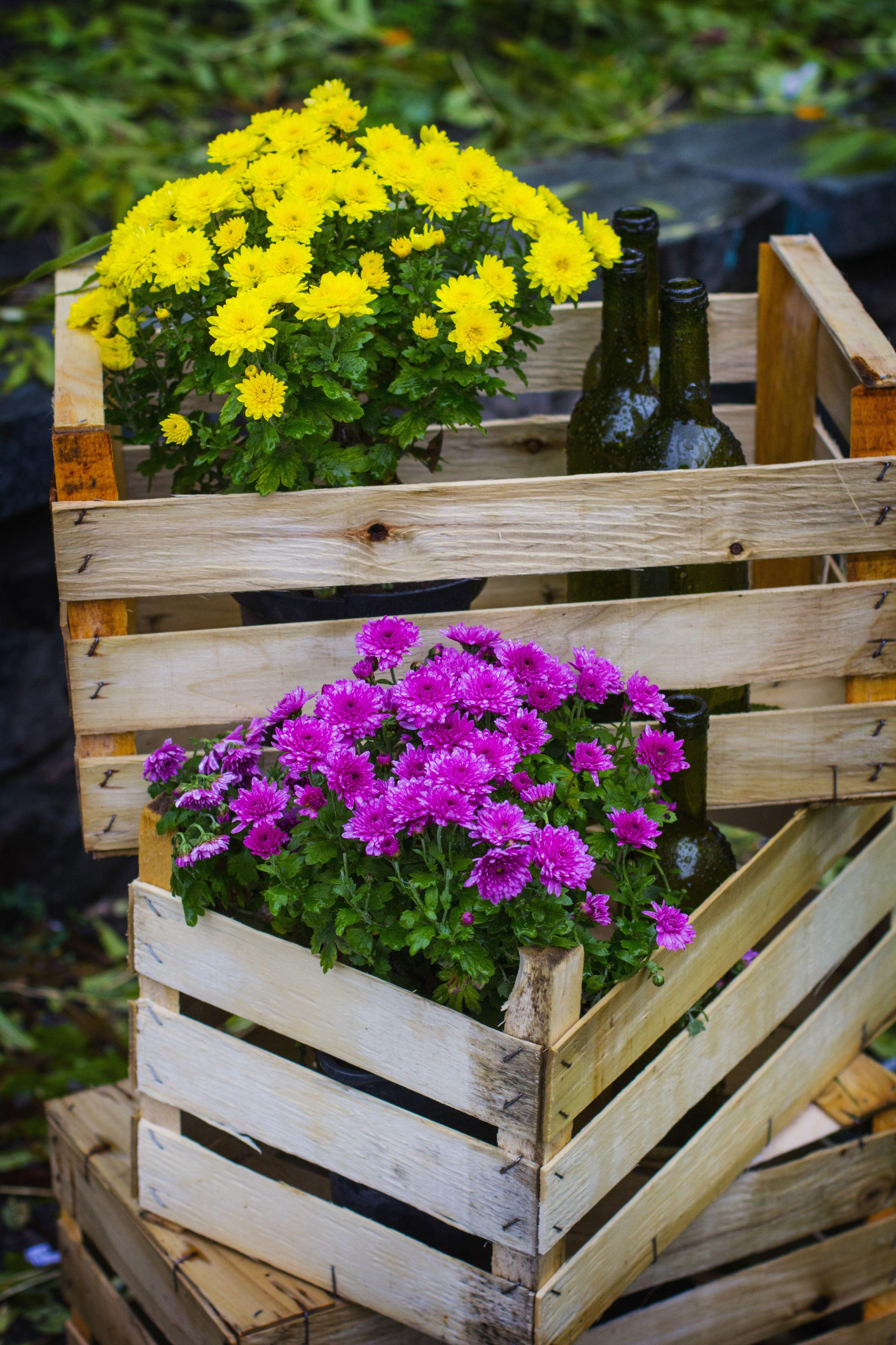 Herbstpflanzen Fur Terrasse Und Balkon Das Haus Pflanzen Herbstpflanzen Chrysanthemen