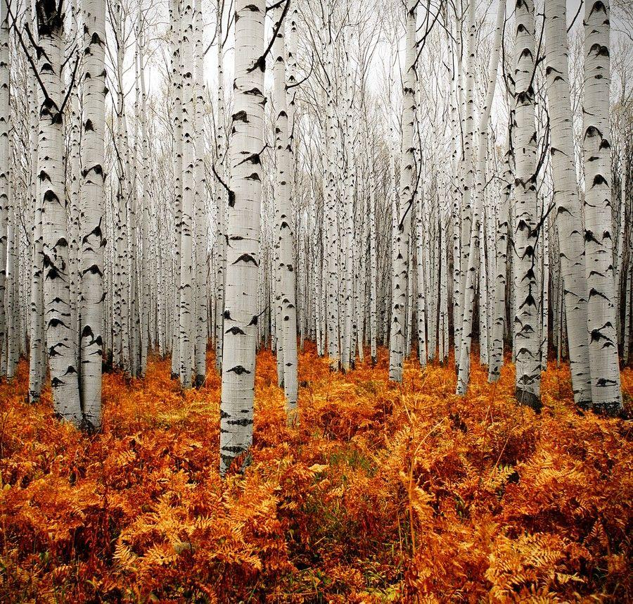 White/orange/yellow forest