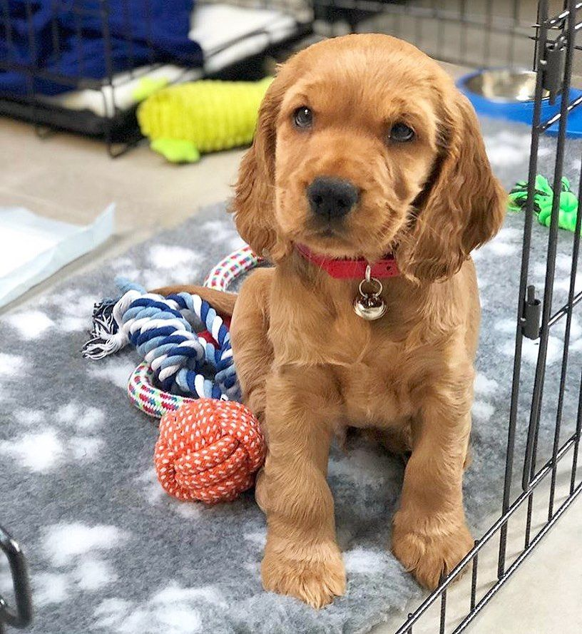 How To Stop Puppies Biting Revealed In 2020 Really Cute Dogs Puppy Biting Dog Dye