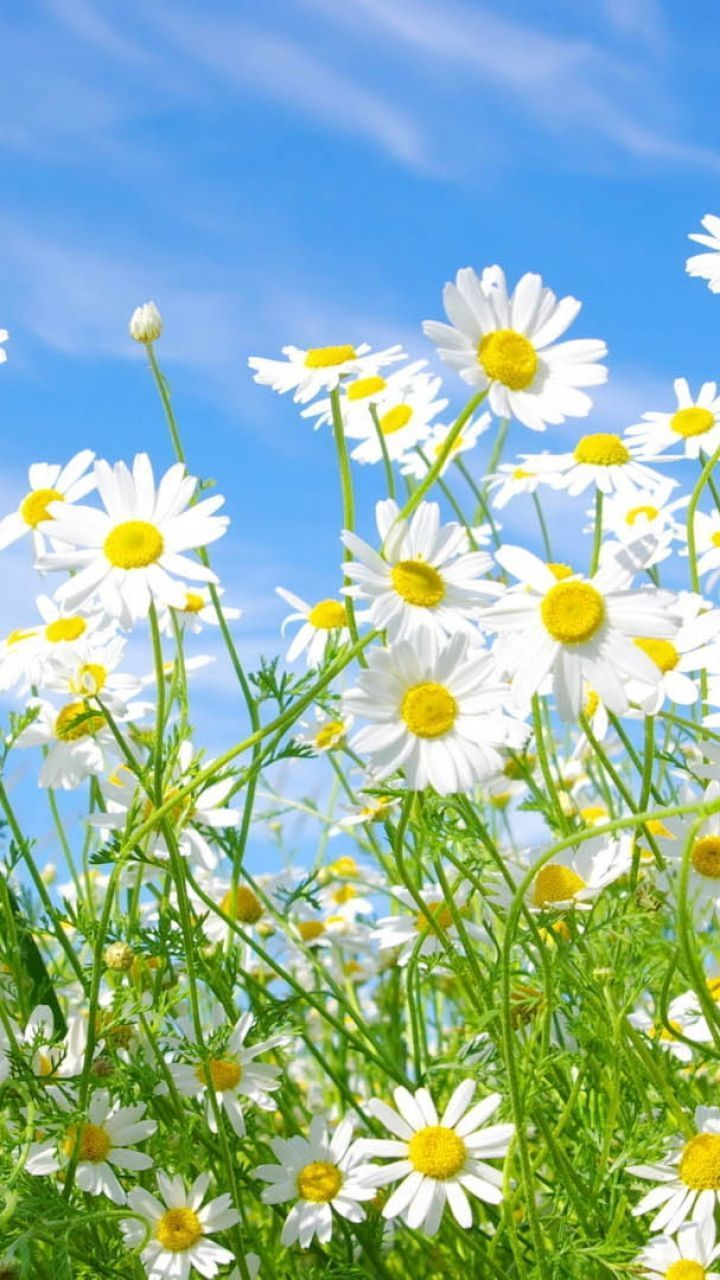 Grass Field Background With Flowers Green Grass Download
