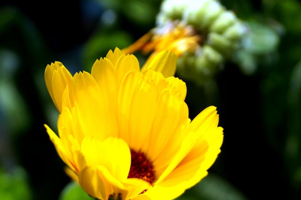 Single Yellow Flower In The Center Of My Dreams Yellow Flowers