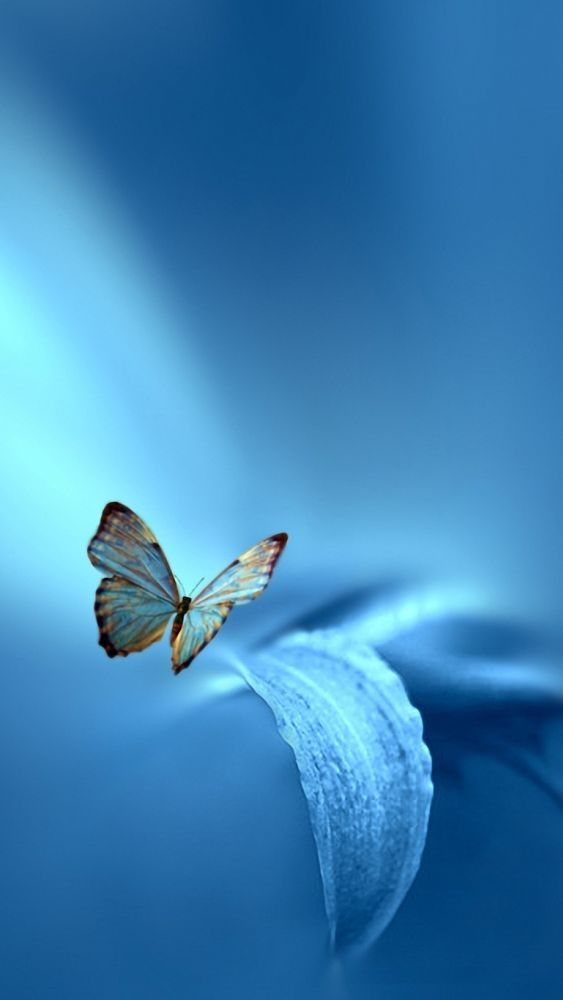 Pin By Kimberly Stambach On Wallpaper Backgrounds Butterfly