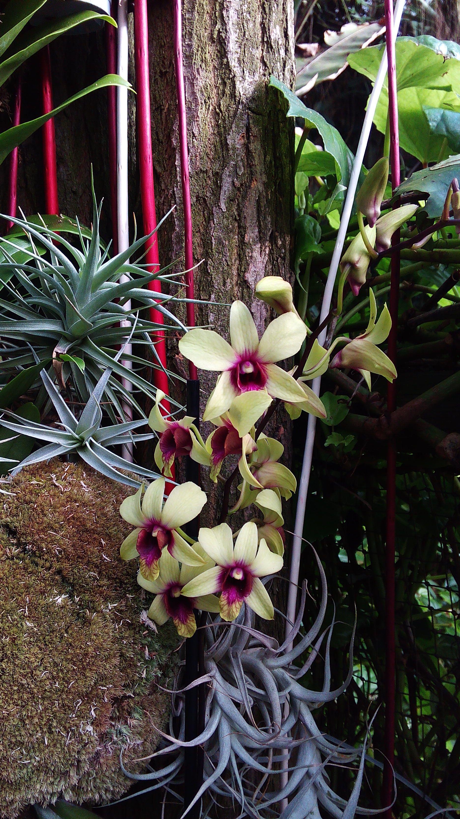 orchid exhibition 03/2015 Orchidée rose, Planter des