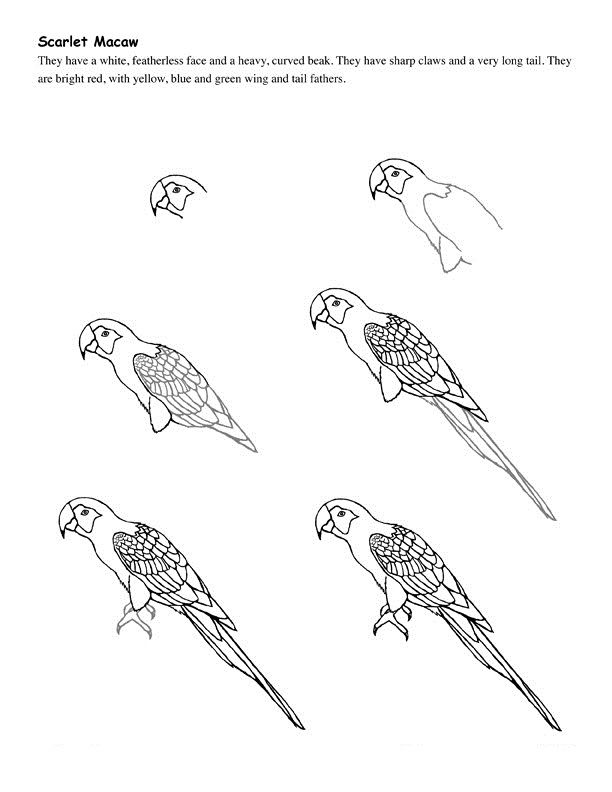 How To Draw Birds Bird Drawings Parrot Drawing Pencil
