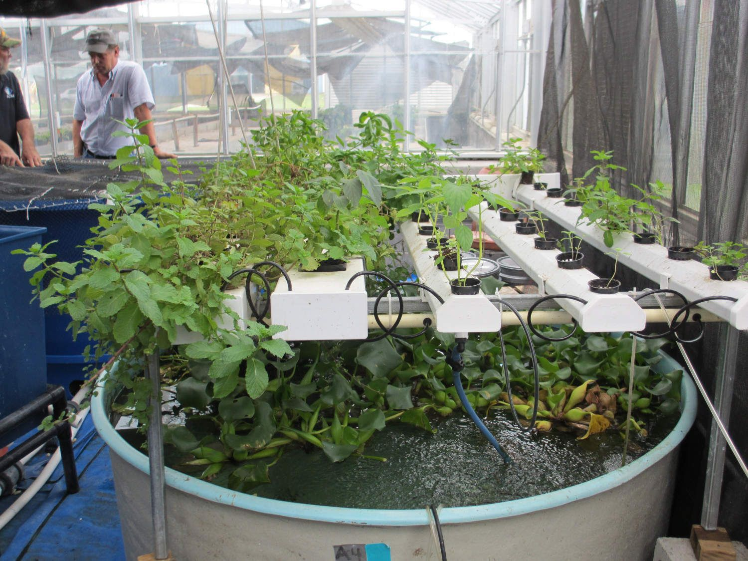 What is aquaponics survival life aquaponics system and for Hydroponic system with fish