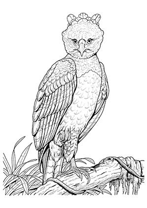Ausmalbild Eule 2 Zum Kostenlosen Ausdrucken Und Ausmalen Ausmalbilder Malvorlagen Eule E In 2020 Ausmalbilder Eulen Ausmalbilder Adler Zeichnung