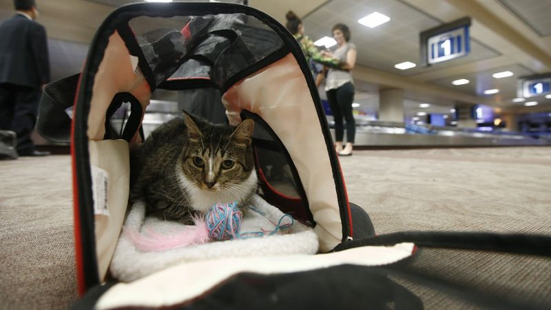 The days of passengers bringing pets on planes could be