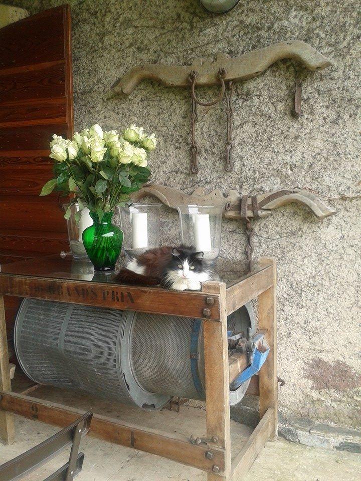 Carrello Per Serbatoio Acqua Piovana Serbatoio