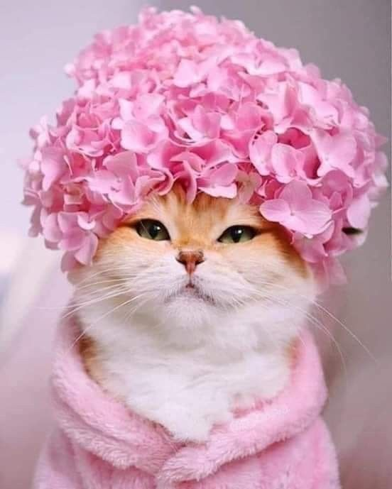 Image in Kittens and cats with flowers collection