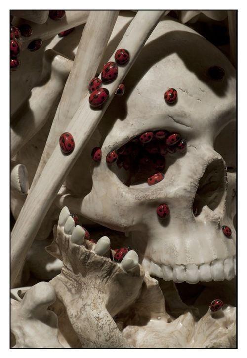 Bertozzi Casoni Ossobello Beautiful Bone 2010 Skull Art Skull And Bones Freaky Clowns