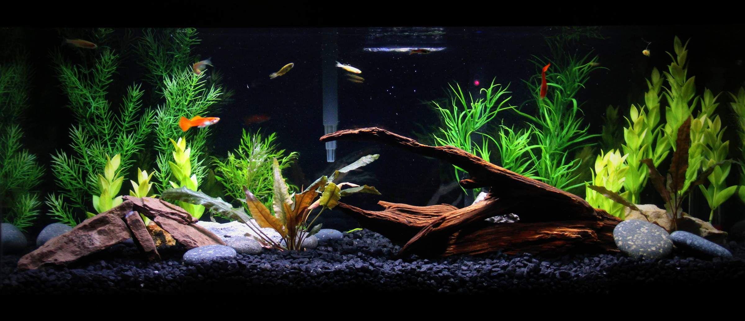 20 gallon aquarium live plants google search pets and for Fish tank 20 gallon