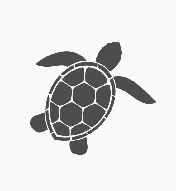 Best Turtle Illustrations Royalty Free Vector Graphics Clip Art Istock Sea Turtle Art Turtle Drawing Turtle Painting