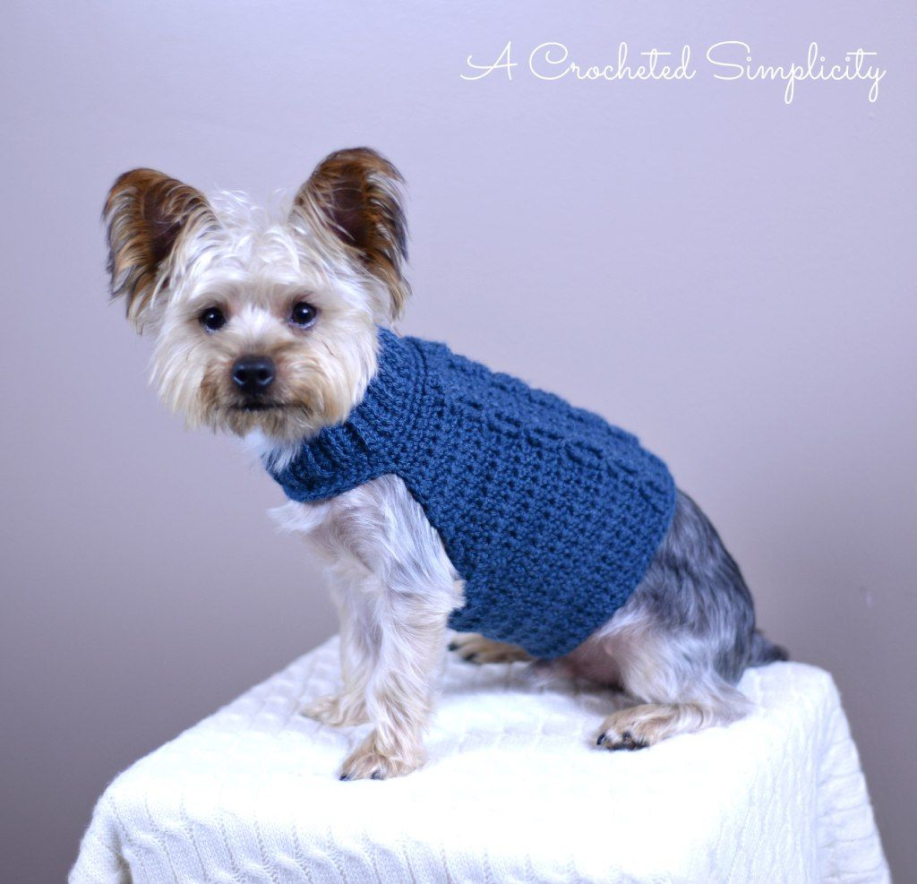 The Cabled Crusader free dog sweater pattern by A Crocheted ...