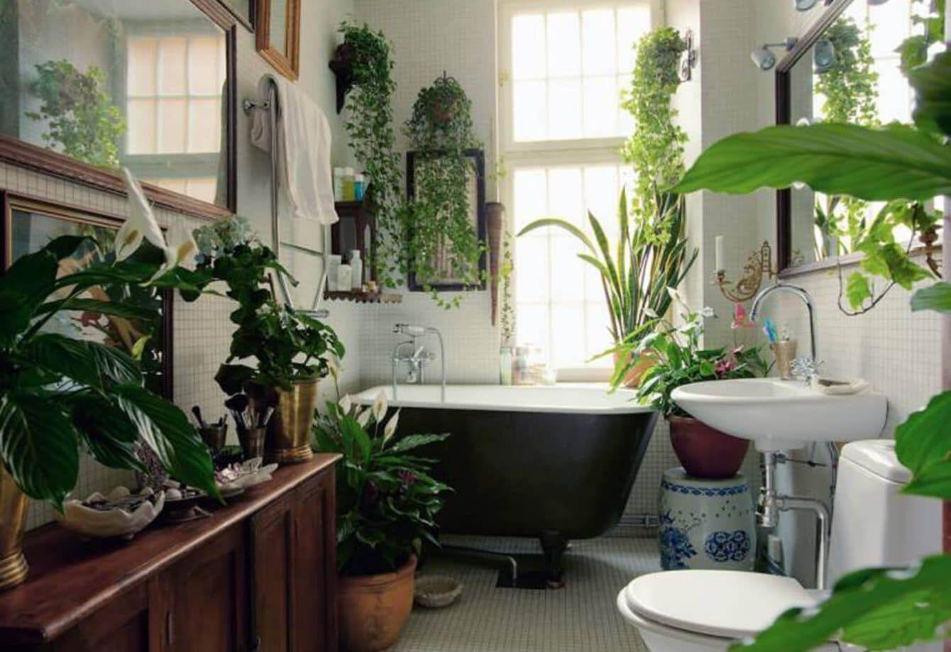 19 Bathroom Plants that Absorb Moisture | Bathroom plants ...