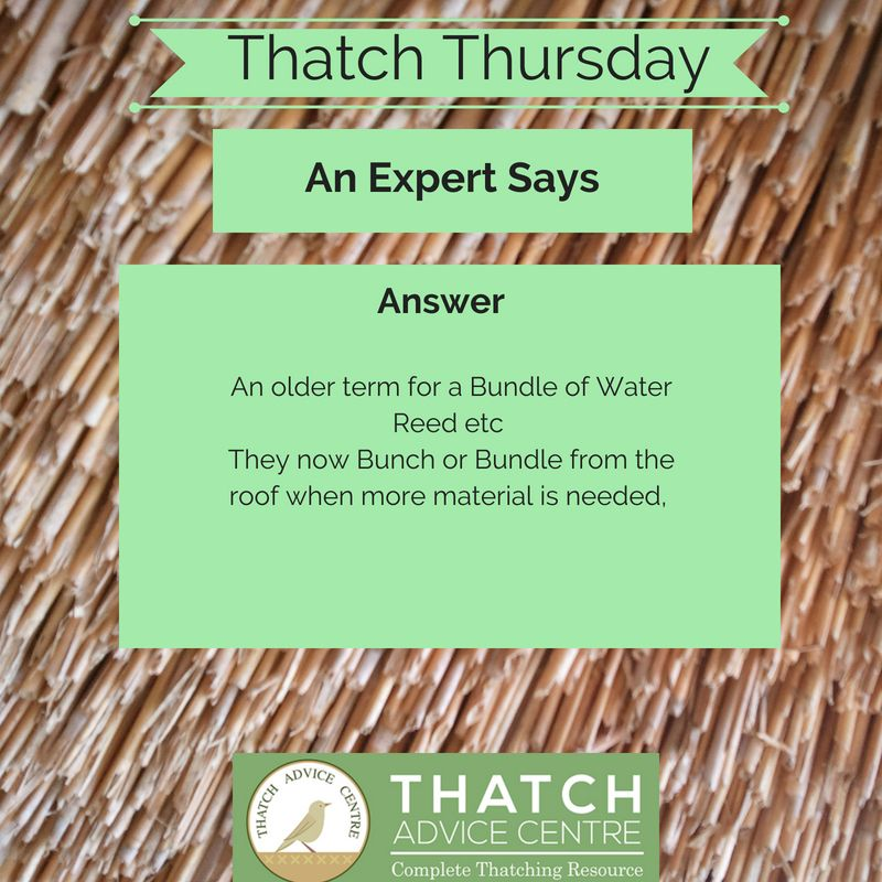Thatch Thursdays Answer 35 Bunch Thatch This Or That Questions Thursday