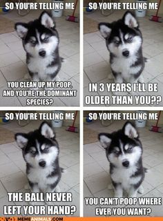 Husky Funny Quotes Vet Google Search Cute Animal Memes Animal
