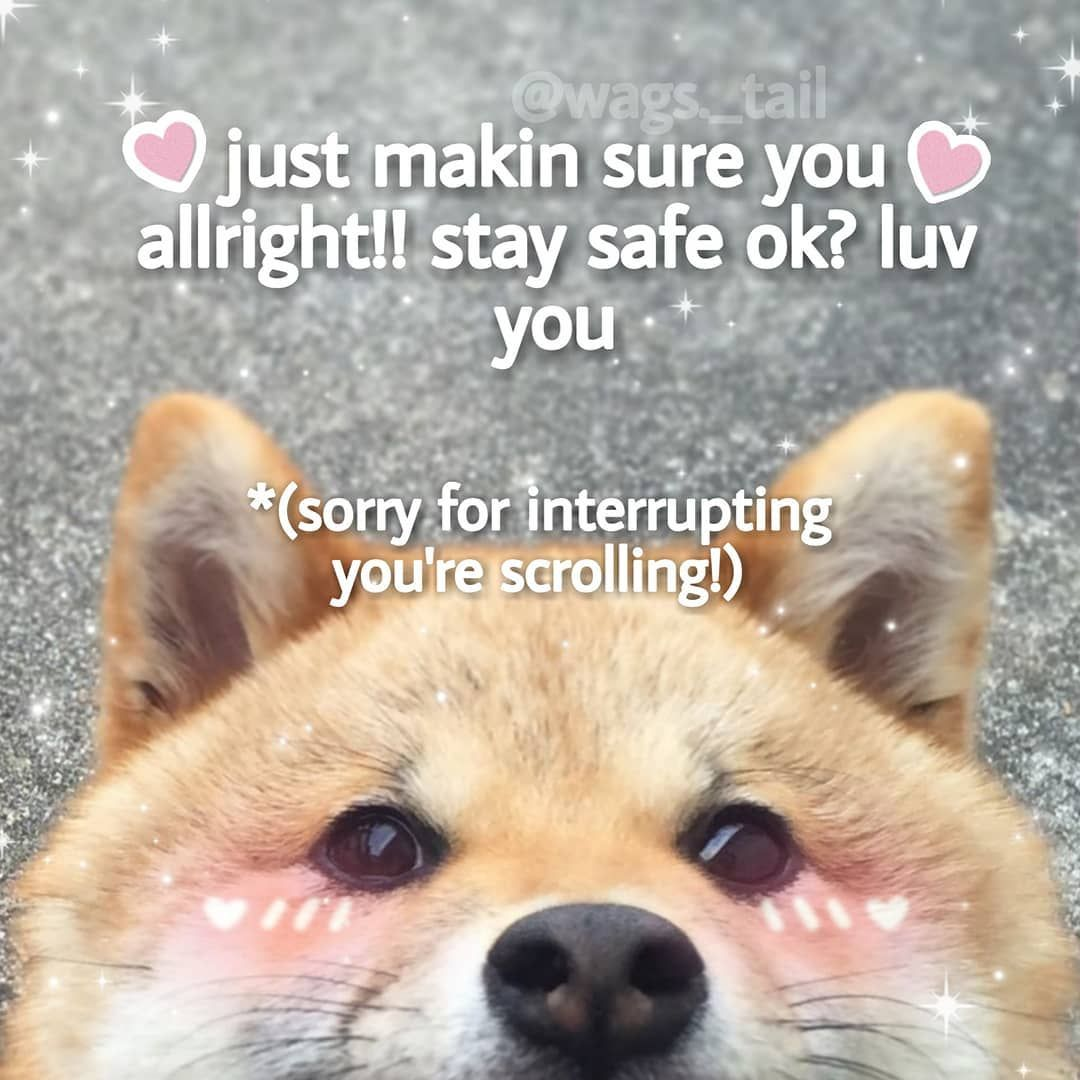 Sorry For Interrupting Your Scrolling Cute Love Memes Wholesome Memes Cute Memes