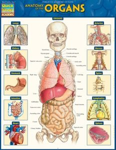 Anatomy also internal organs of the human body list pdf english language rh pinterest