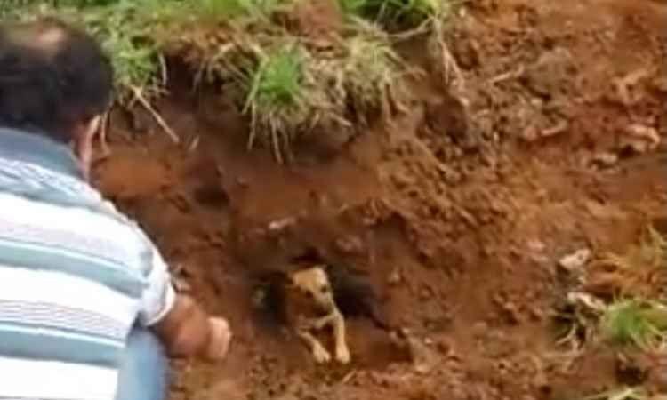 Bombeiros resgatam cinco cachorros presos em manilha de Juiz de Fora