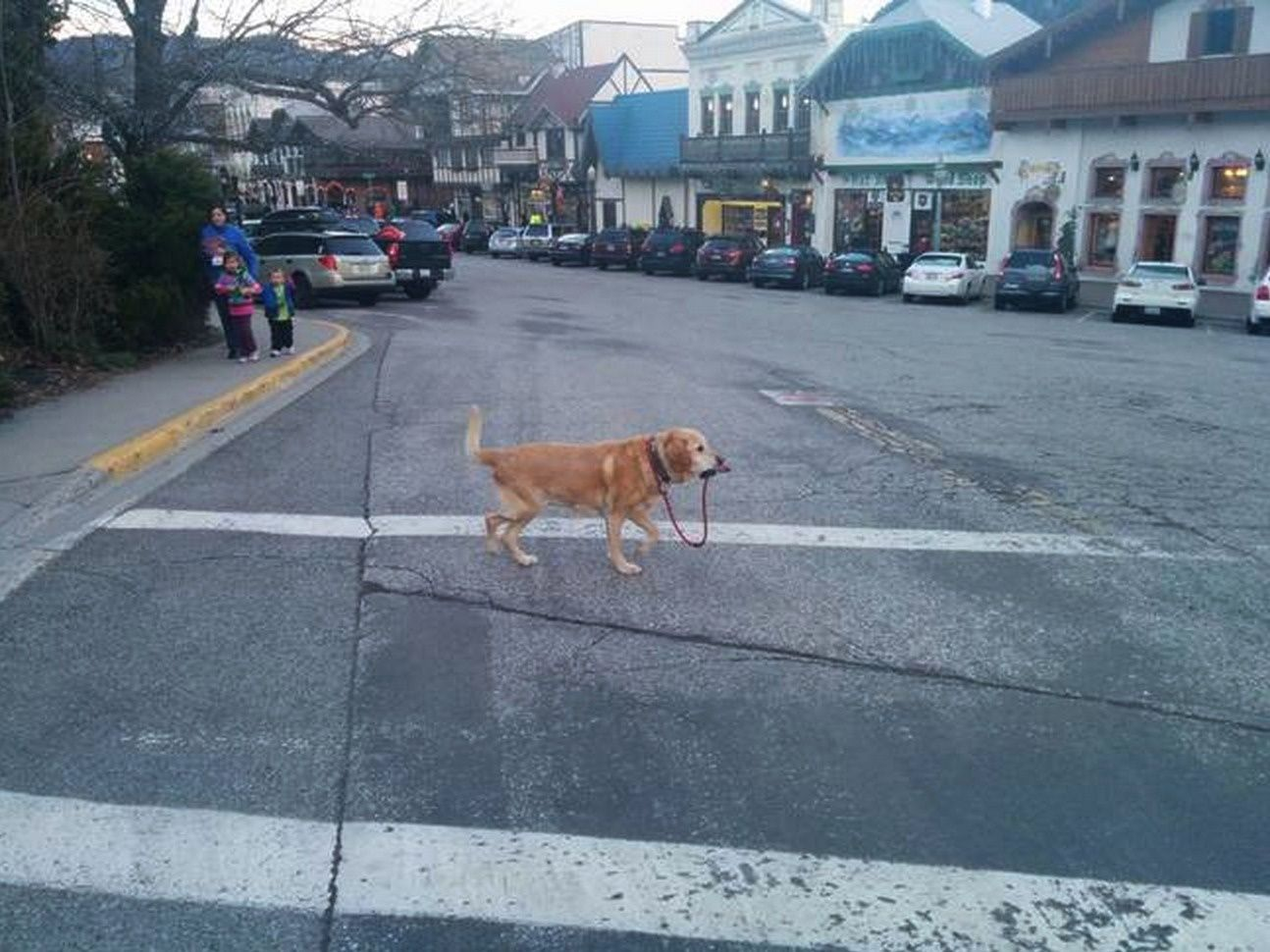Iull walk myself funnies pinterest dog and hilarious