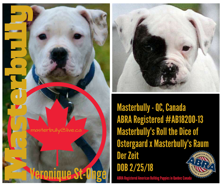 Masterbully - QC, Canada ABRA Registered #AB18200-13