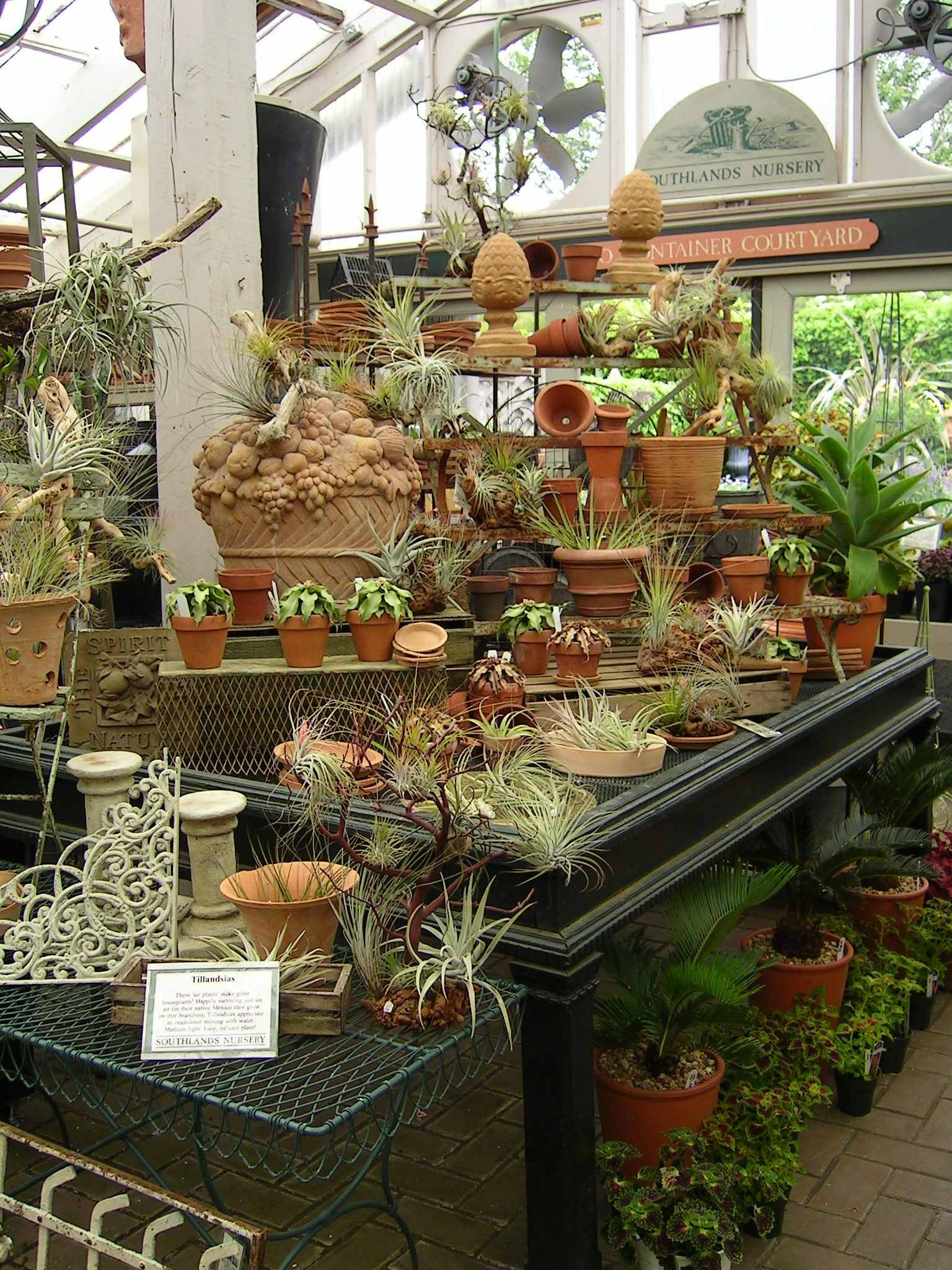 Air Plants Garden Center Displays Succulent Display Air Plant