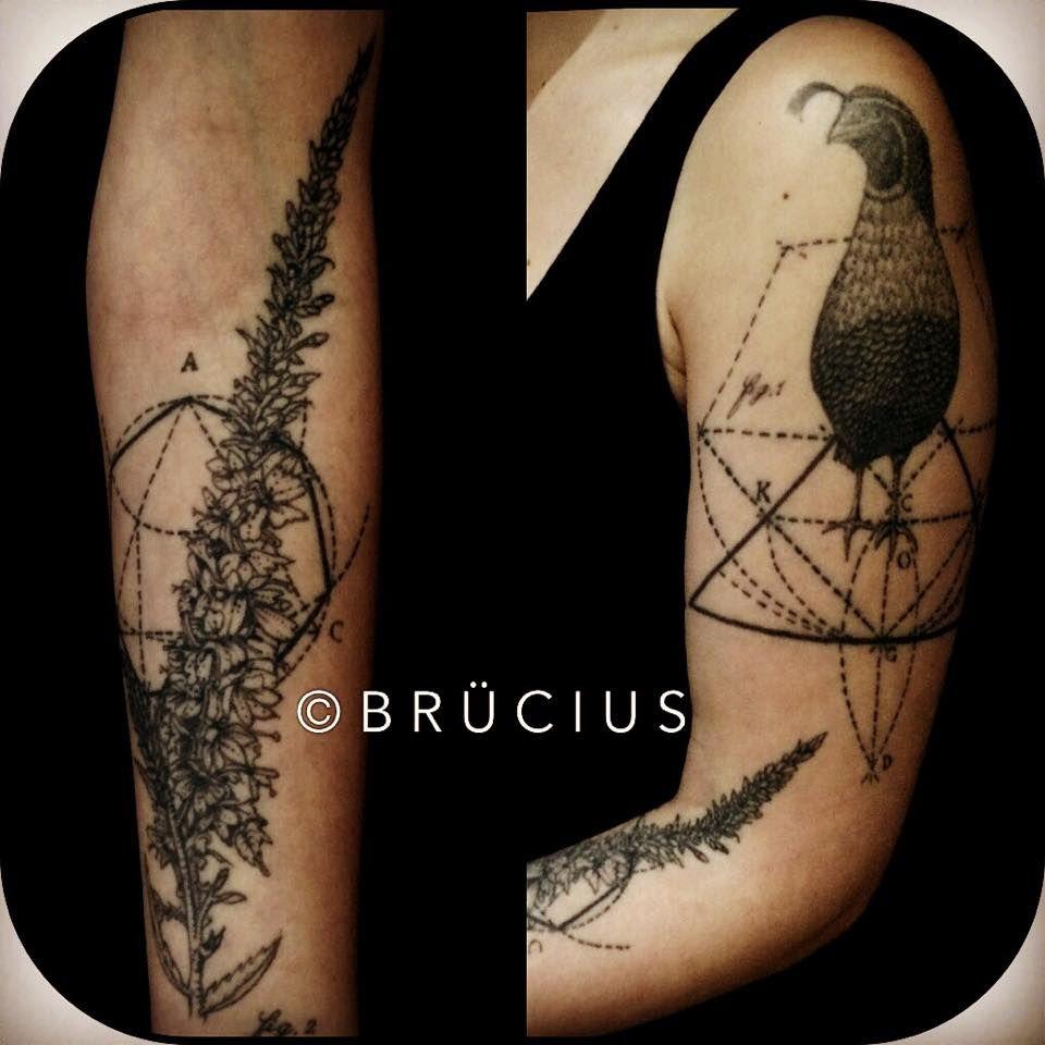 Brucius Tattoo Sf Etching Engraving Art Antique Fauna Vintage Scientific Illustration Quail Bird Tattoos Engraving Art Scientific Illustration