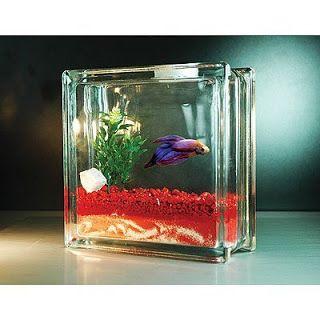 All About Betta Fish Tank Setup For Betta Fish Betta Fish Tank Fish Tank Cool Fish