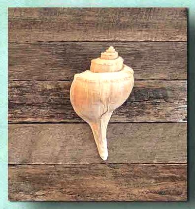 DIY Framed Shell Wall Art: http://www.completely-coastal.com/2013/01/shell-art.html