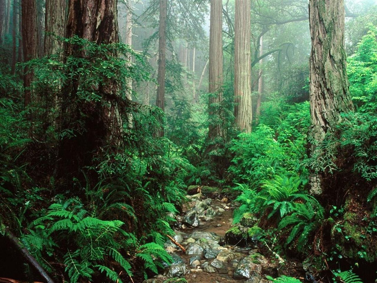 Amazing Nature Wallpapers Forest Wallpaper Amazon Forest