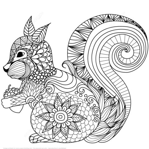 Ausmalbild: hübsches Eichhörnchen Zentangle. Kategorien: Zentangle ...