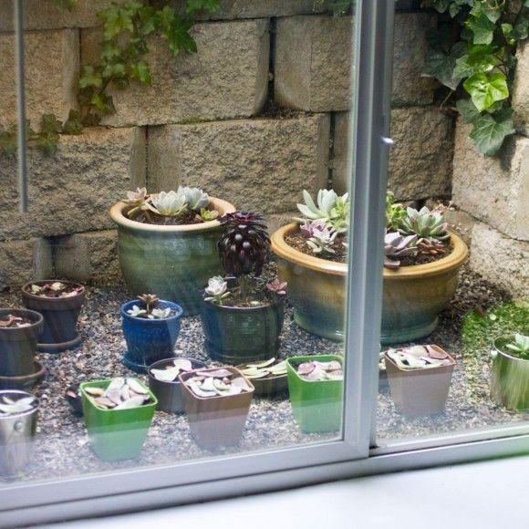 well basement windows cacti garden green houses window ideas basement