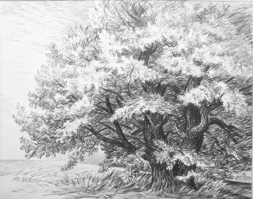 деревья рисунок графика скандального разрыва никак