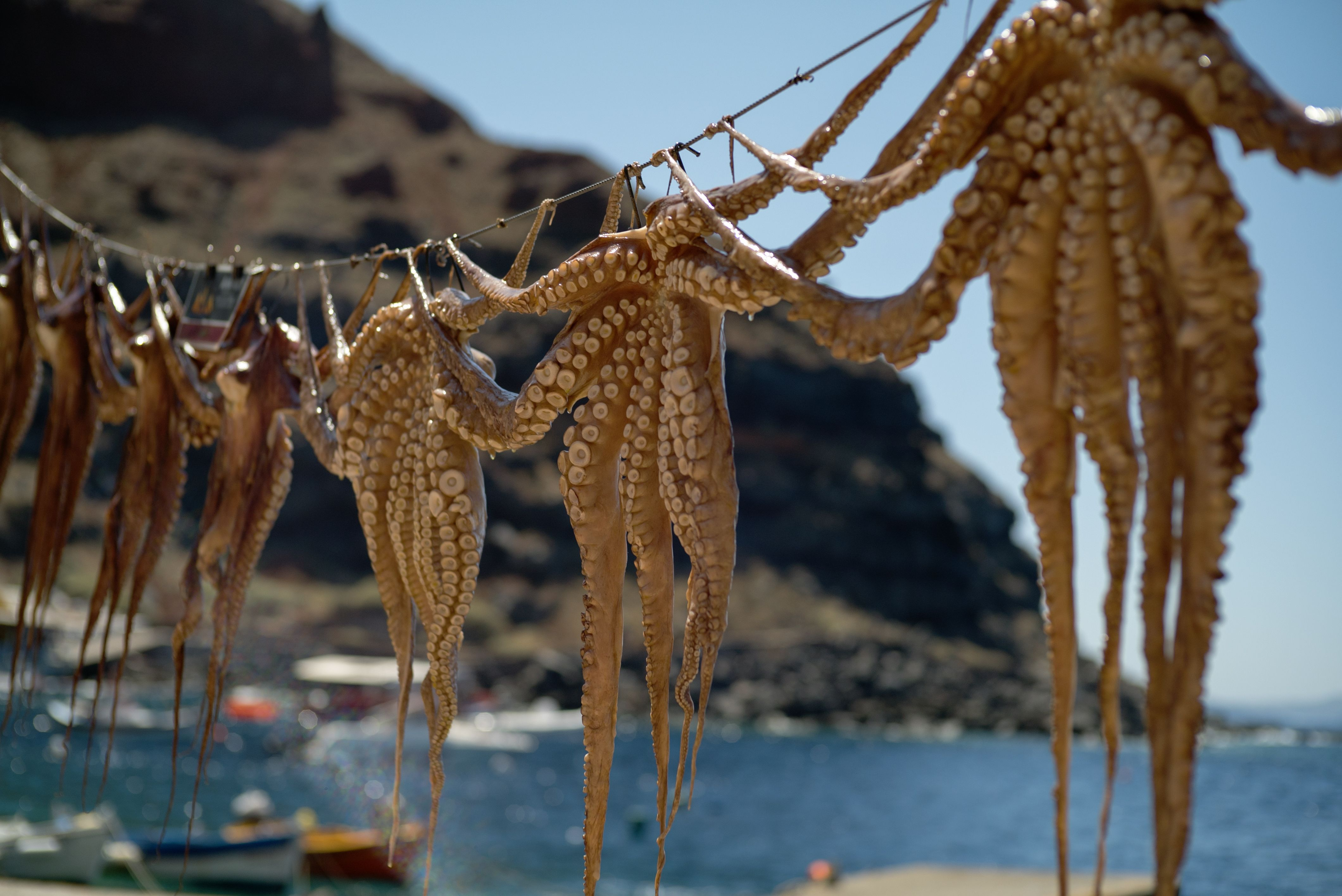 Octopus drying out under the harsh sun of #santorini in #amoudi bay. Watch the full video of our stay here https://vimeo.com/135410327   #greece #holidays #summer #beach