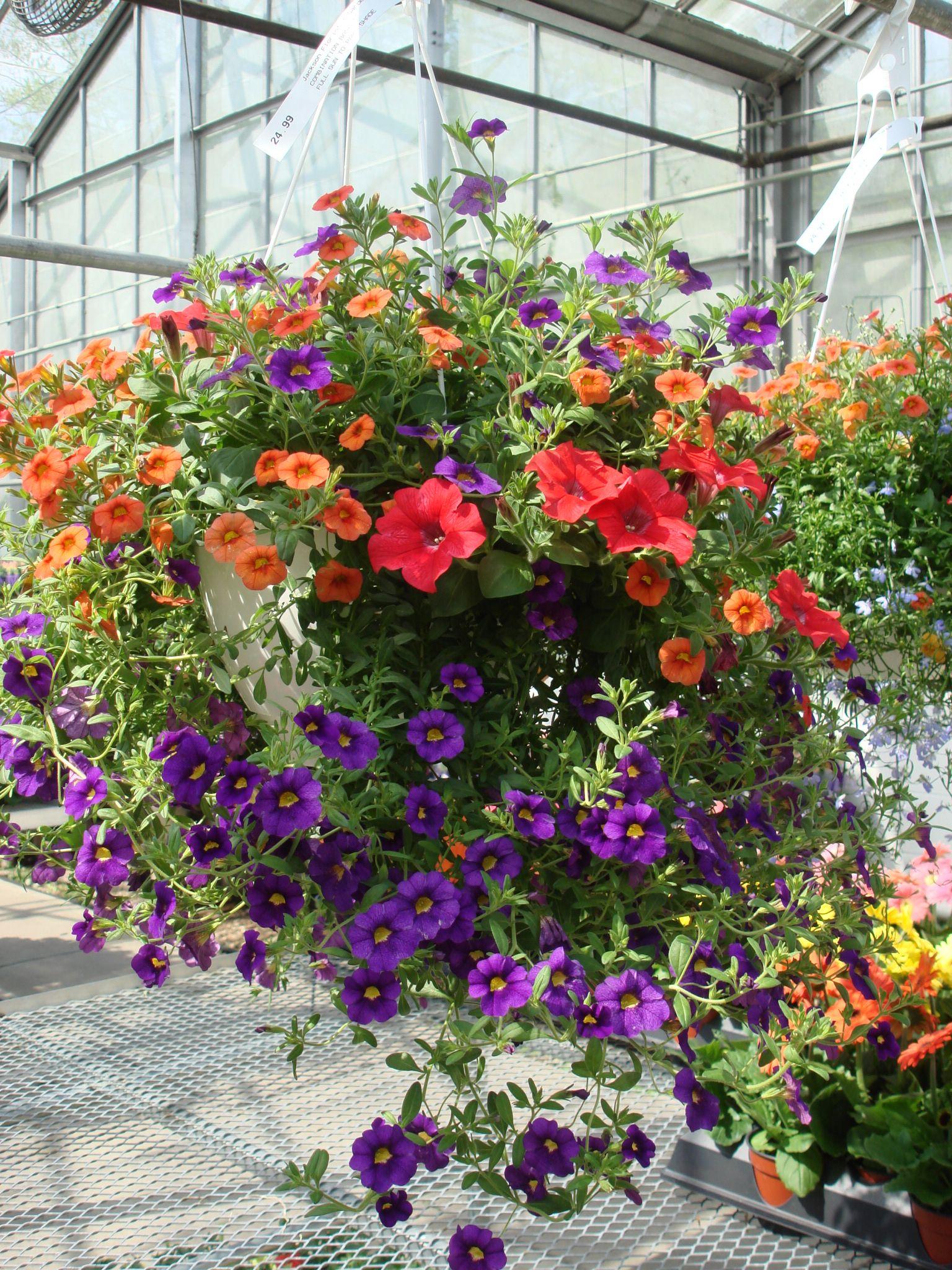 Jackson Florist and Garden Center mixedhangingbasket