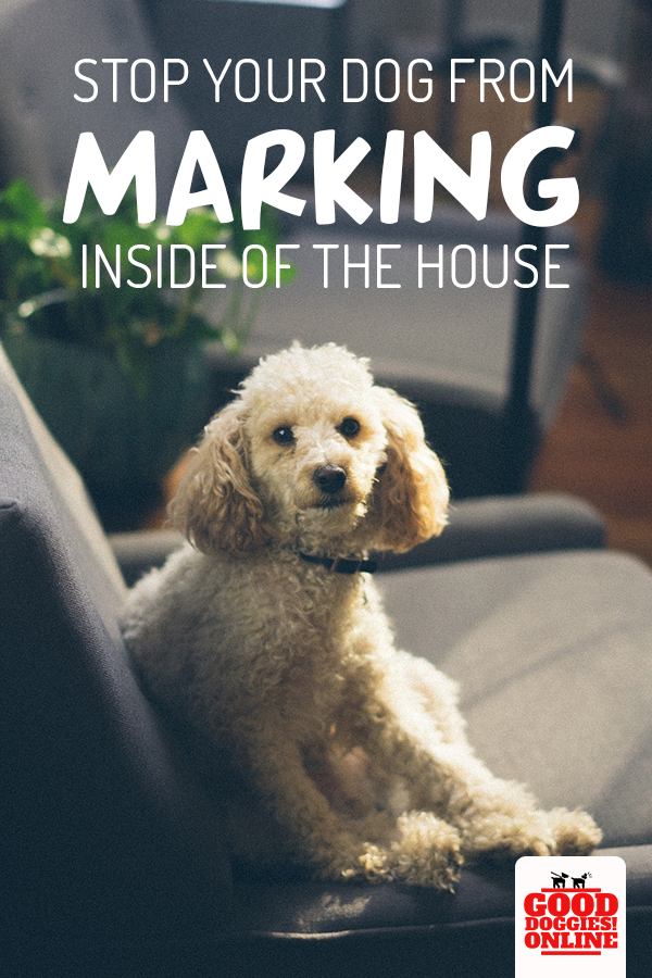 507b4c1724616d94a7d22bfb50a48f81 - How To Get A Dog To Stop Marking In House
