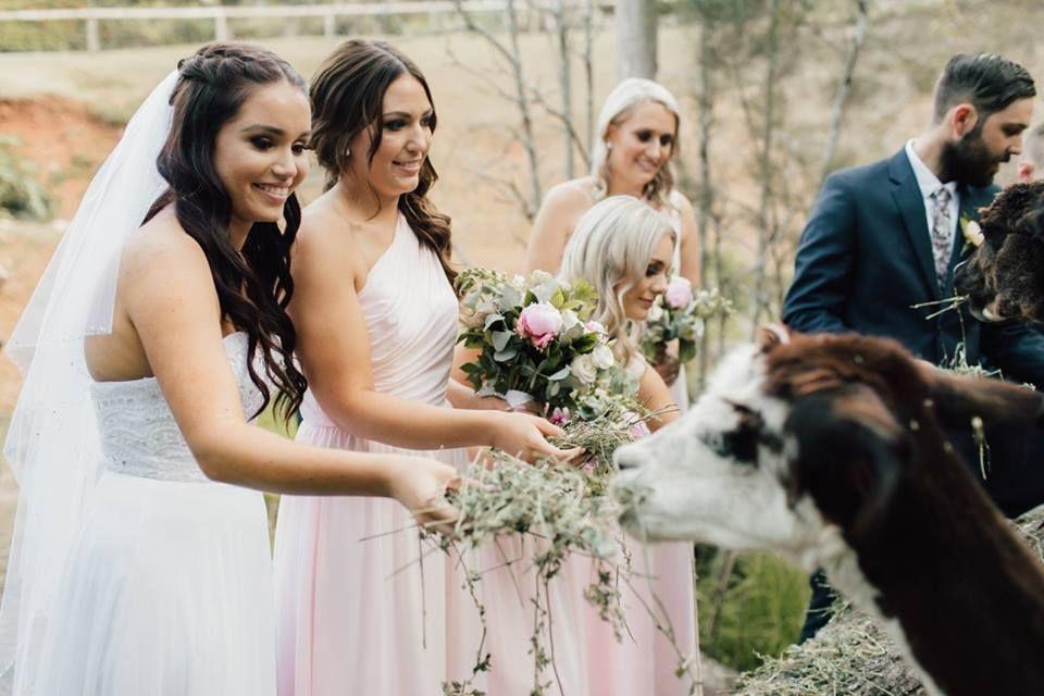 Rainforest Gardens Wedding Venues Brisbane