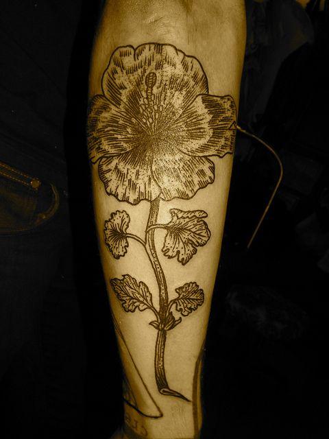 poppy by lyam, via Flickr