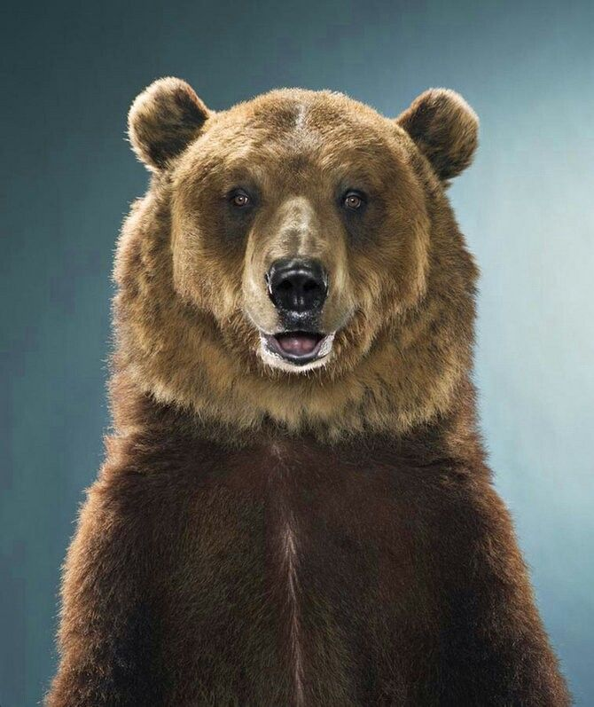 картинка медведь подмигивает мастер-класс
