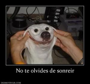 1000 Images About Tu Commands On Pinterest Chistes Spanish And Quotes In Spanish Funny Animal Memes Funny Dog Pictures Funny Animals