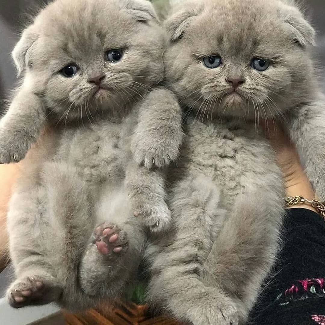 The Most Known Your Cat Behaviour Problems And How To Fix Them Easly In 2020 Cat Behavior Cat Behavior Problems Animal Behavior
