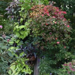 Article on ideas of extreme container gardening from All Things Plants.