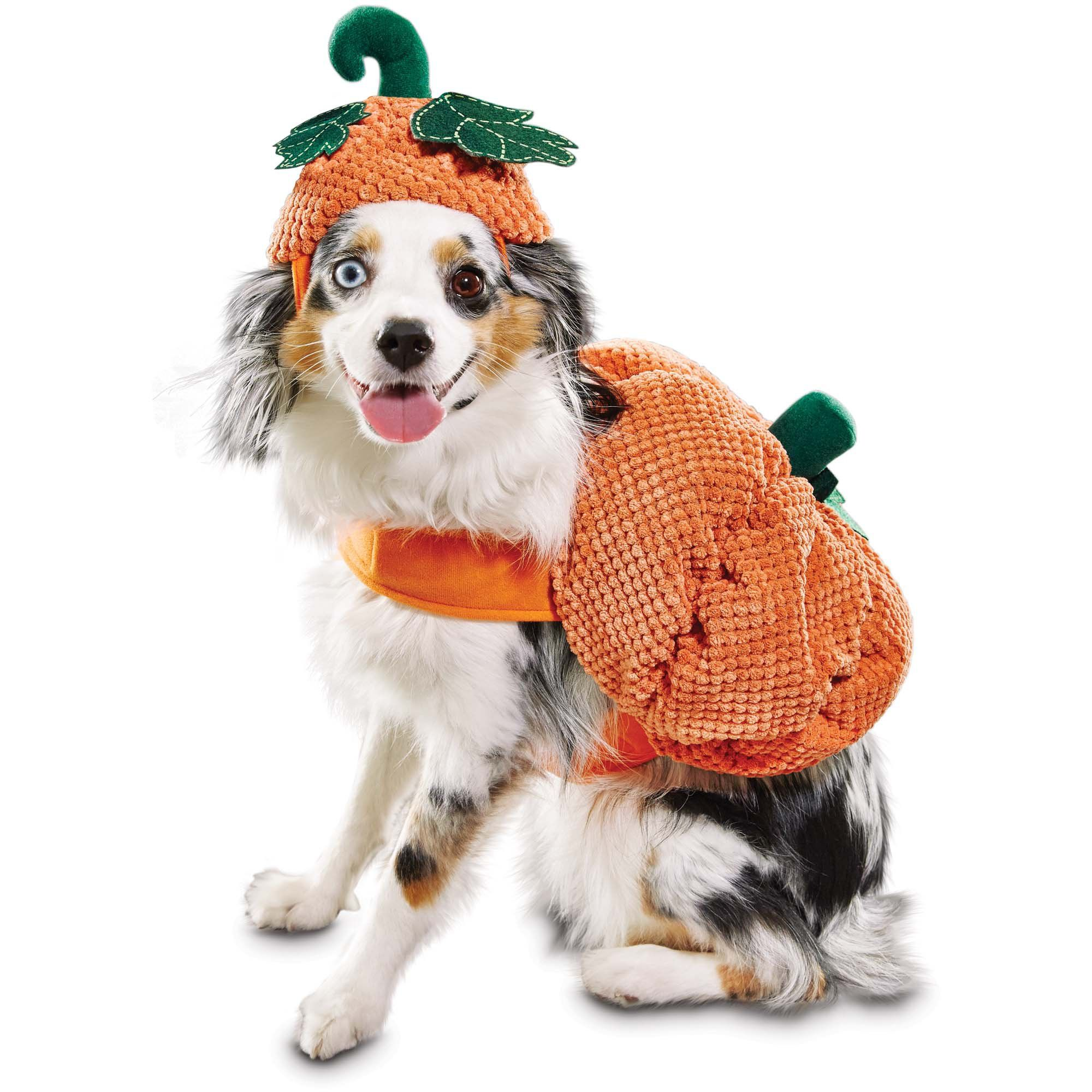 Bootique Pumpkin Dog Costume Petco Pet Halloween Costumes Pet